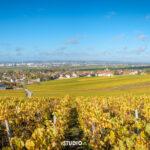 Vignes à Cernay-les-Reims