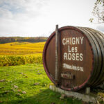 Vignes à Chigny-les-Roses
